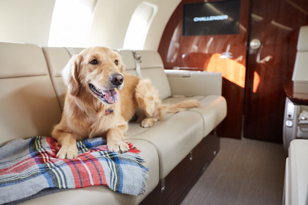 dog or pet inside a private jet